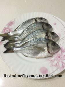 Lidaki Balığı